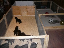chesapeake-pups-carleton-place4