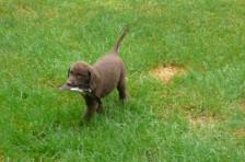 chesapeake-pups-carleton-place6