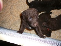 chesapeake-pups-carleton-place8
