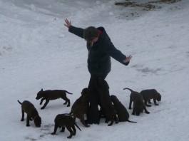 chesapeake-pups-in-wintertime