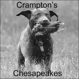 Crampton's Chesapeake Bay Retrievers