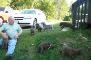 Don Crampton with a litter of pups